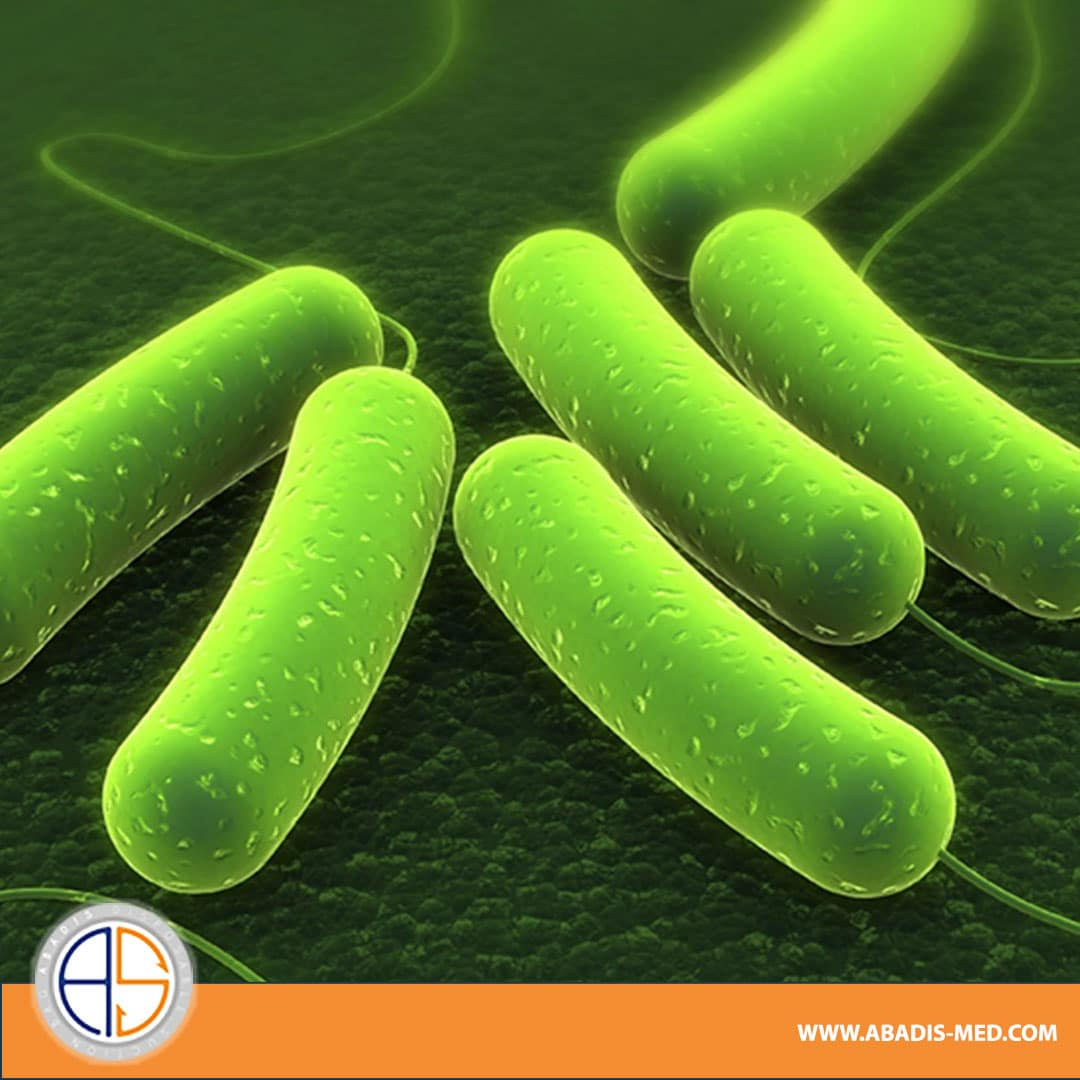 The introduction of the most common pathogens